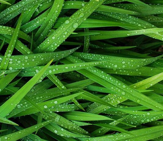 Co ma wpływ na wygląd trawnika